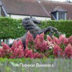 Сорта гратензии садовой - фото
