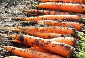 kak-hranit-sveklu-i-morkov-zimoj-v-domashnih-usloviyah foto12232