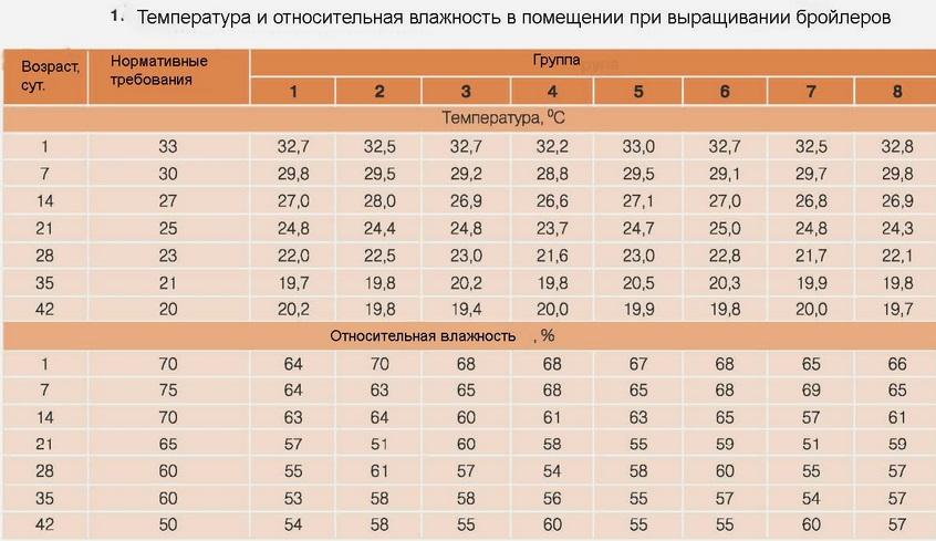 vyrashhivanie-brojlerov-v-domashnih-usloviyah-na-myaso-v-korotkie-sroki foto1254